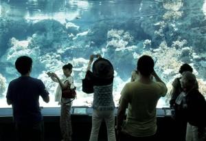 Okinawa Ocean Expo Park 2012
