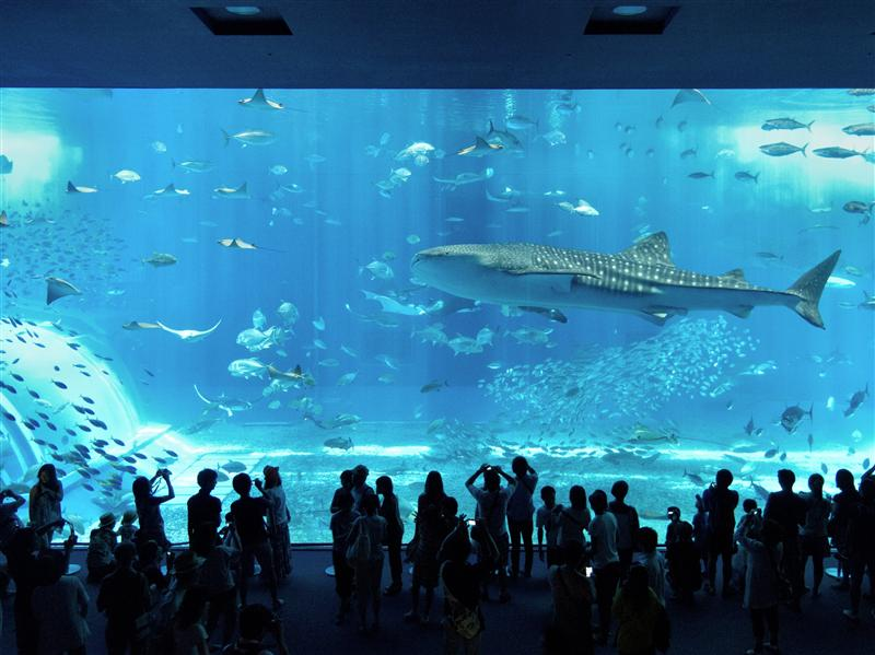 Okinawa Ocean Expo Park - Big Fish in Fish Tank