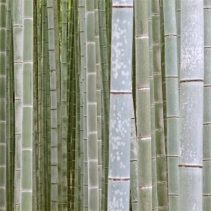 Kyoto 2012 - Arashiyama Bamboo Forest
