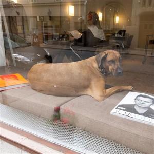 Dog at Hairdresser's Shop