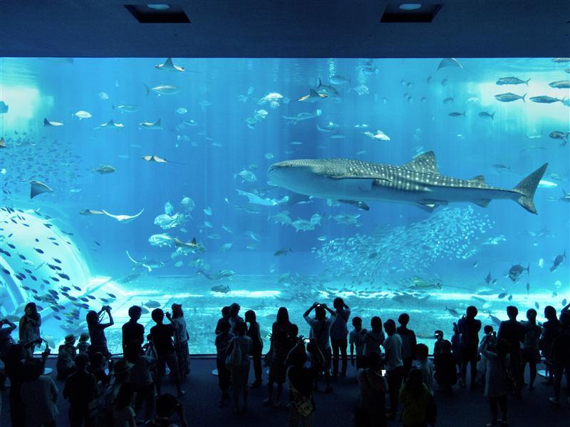 Okinawa Ocean Expo Park - Big Fish in Fish Tank