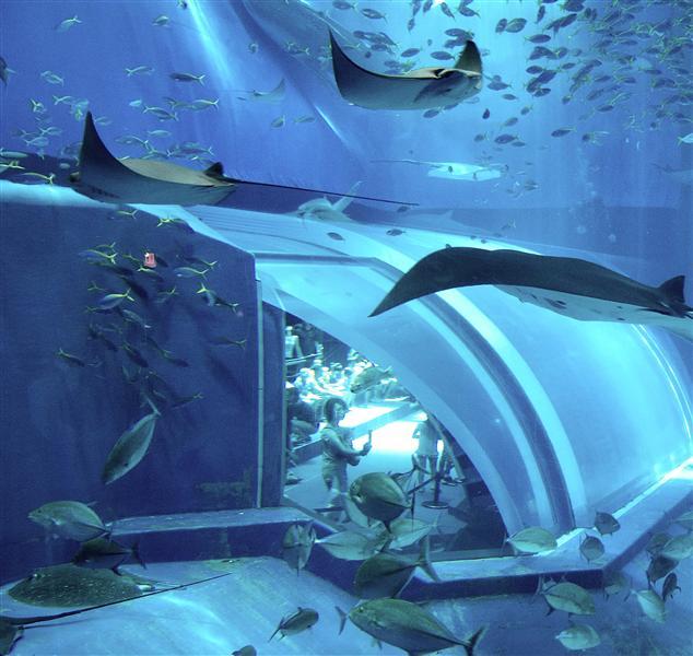 Okinawa Ocean Expo Park - Visitors look into Fish Tank