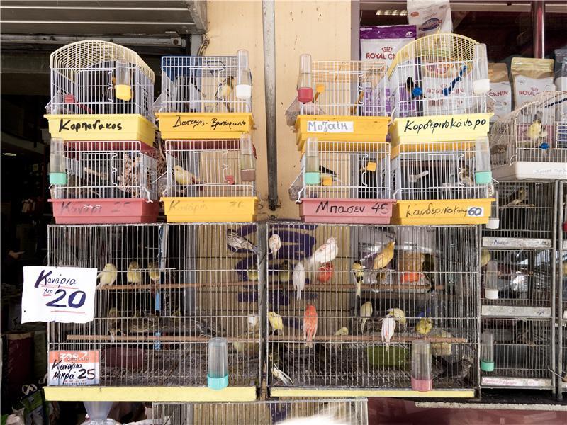 Alive Birds